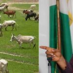 South East Governors Places Ban On Open Grazing And Movement Of Cows By Foot 28