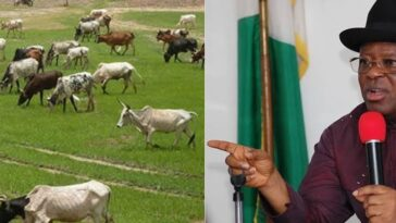 South East Governors Places Ban On Open Grazing And Movement Of Cows By Foot 3