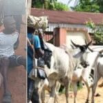 Amotekun Ejects 37 Herders, 5000 Cows Over Refusal To Register With Ondo Government 27