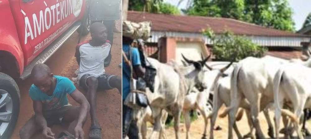 Amotekun Ejects 37 Herders, 5000 Cows Over Refusal To Register With Ondo Government 1