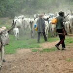 Fulani Herdsmen Have Started Relocating To Kano For Their Safety - MACBAN 27