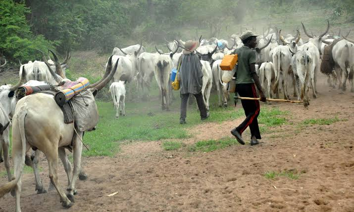 Fulani Herdsmen Have Started Relocating To Kano For Their Safety - MACBAN 1