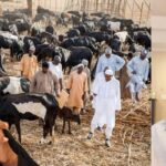Buhari Imports His Fulani Kinsmen Into The Country To Terrorize Nigerians - Pastor Giwa 17