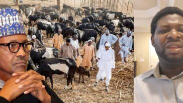 Buhari Imports His Fulani Kinsmen Into The Country To Terrorize Nigerians - Pastor Giwa 5