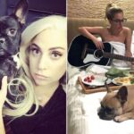 Lady Gaga Offers $500,000 Reward For Her Stolen Dogs After Thieves Shot Her Dog Walker 28