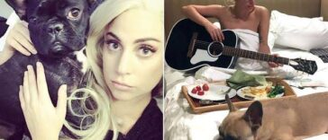 Lady Gaga Offers $500,000 Reward For Her Stolen Dogs After Thieves Shot Her Dog Walker 25