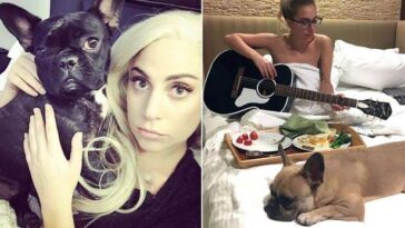 Lady Gaga Offers $500,000 Reward For Her Stolen Dogs After Thieves Shot Her Dog Walker 13