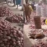 Kano Traders Laments As Onion Bag Sold In South For N35k Crashes To N7k In The North 27