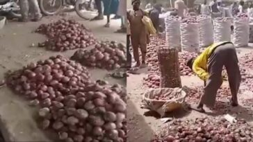 Kano Traders Laments As Onion Bag Sold In South For N35k Crashes To N7k In The North 9