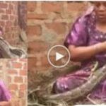 Woman Caught Breastfeeding A Giant Snake While Calling The Names Of Her Enemies 27