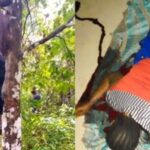 Jobless Man Commits Suicide After Killing His Wife For Denying Him Sεx 27