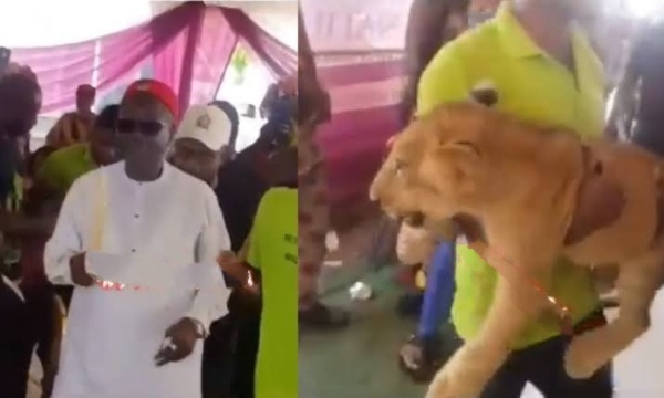 Businessman Storms His Father's Burial Ceremony With A Lion In Anambra [Video] 1