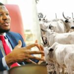 Cattle Have More Economic Value Than The Entire Oil And Gas In Nigeria - Adamu Garba 10