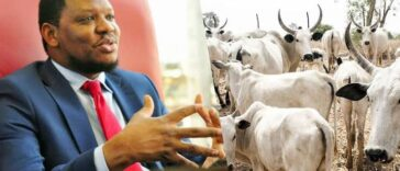 Cattle Have More Economic Value Than The Entire Oil And Gas In Nigeria - Adamu Garba 25
