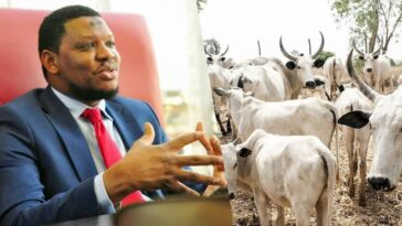 Cattle Have More Economic Value Than The Entire Oil And Gas In Nigeria - Adamu Garba 8