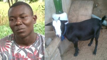 Man Runs Mad After His Girlfriend Allegedly Turned Into Goat While In Bed With Him