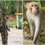 Nigerian Soldier Threatens To Shoot Motorist For Killing His Monkey In Adamawa