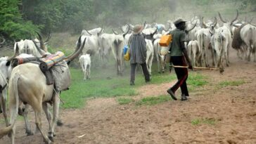 Fleeing Herdsmen Arrested As Cow Kills 2-Month-Old Baby In Delta State