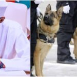 Buhari Approves N658 Million For Deployment Of Dogs To Lagos, Abuja Airports