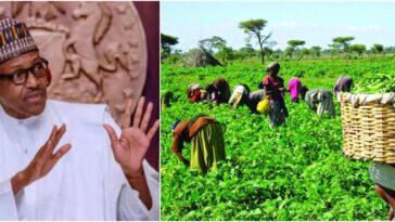Buhari Approves Creation Of Farm Estates In 108 Senatorial Districts Across Nigeria