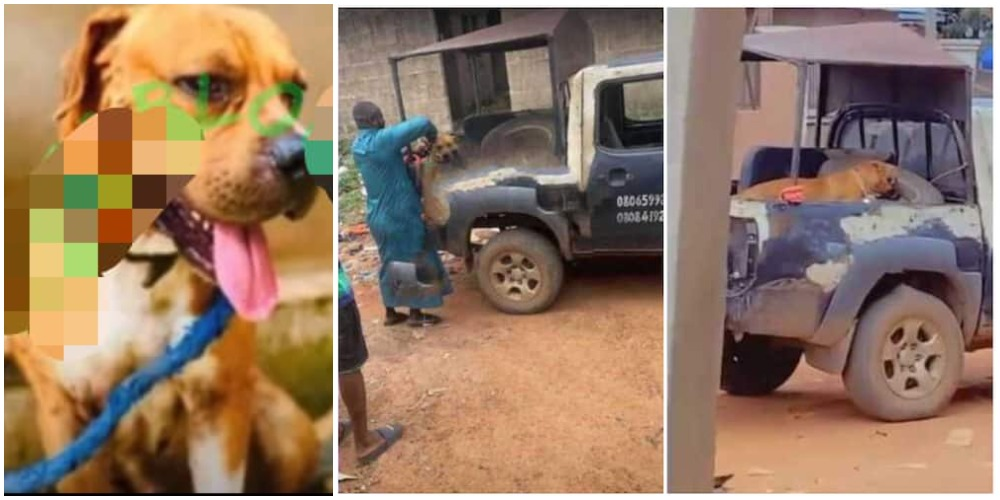 Police Arrest Dog For Biting 18-Year-Old University Student's Penîs In Ondo [Video]