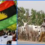 IPOB Bans Rearing And Consumption Of Cows In South-East, Allows Only Local Breed