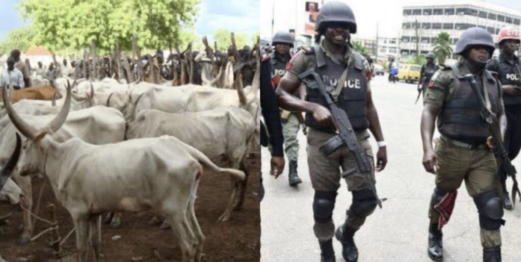 Police Arrest Herdsman, 73 Cows, 13 Sheep For Trespassing Into Farmland And Destroying Crops
