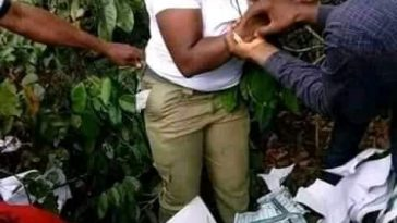 Youth Corper caught inside the bush thumb printing ballot papers for APC - PHOTOS 6